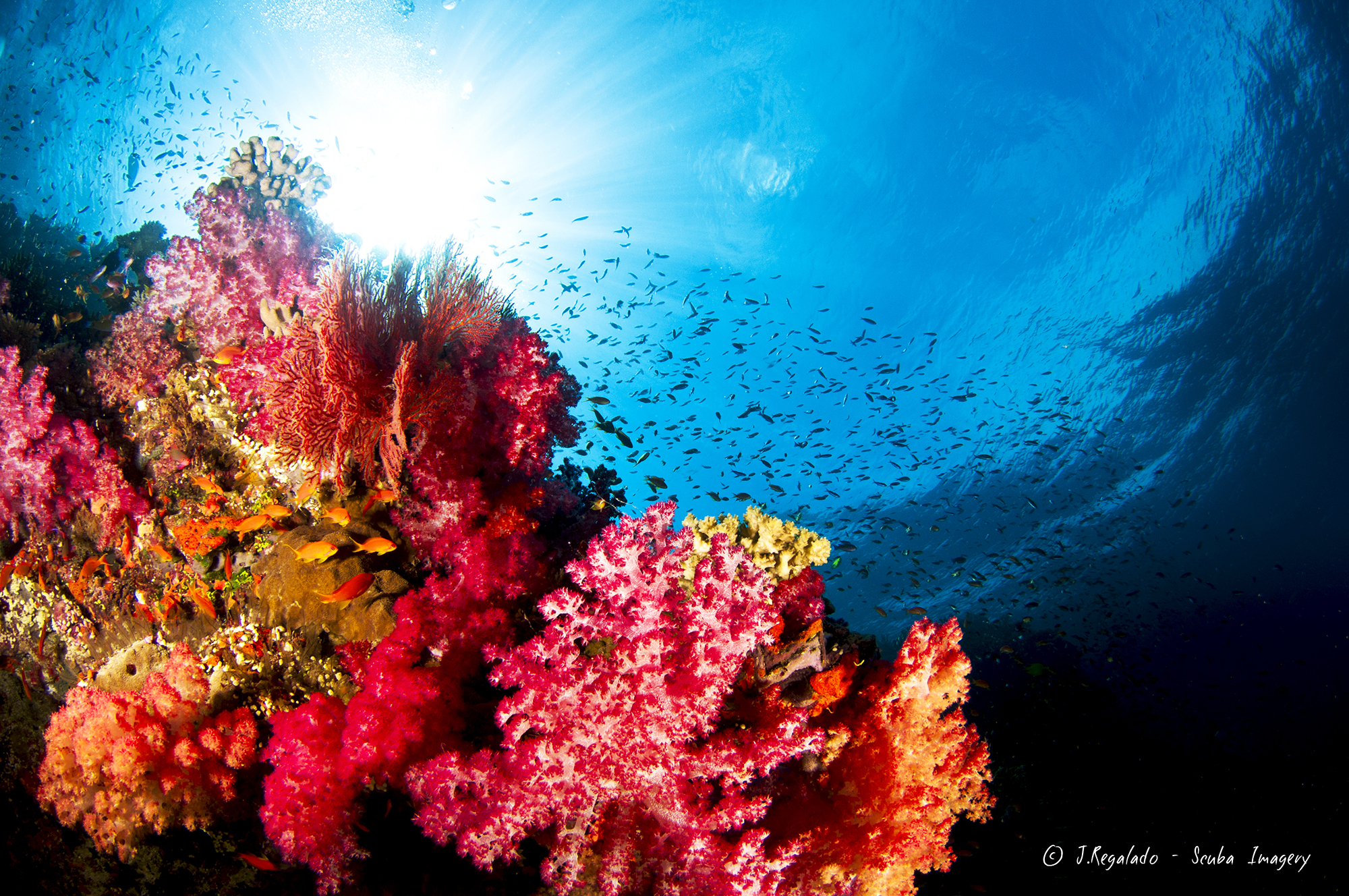 The Soft Coral capital of the world, Fiji.